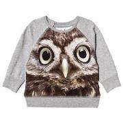 Molo Elsa T-Shirt Owl baby 62 cm (2-4 mdr)
